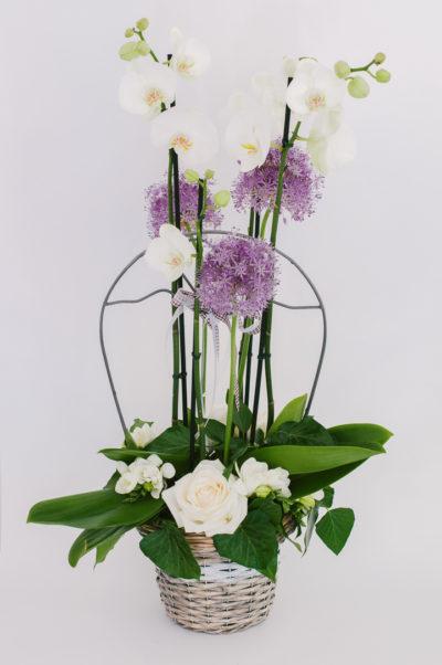 Aranjament cu Orhidee Phalaenopsis