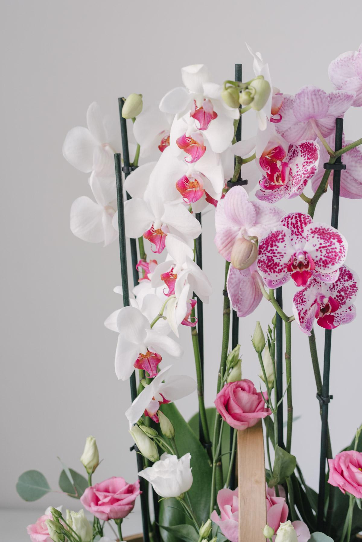 Cos Cu Plante Si Flori