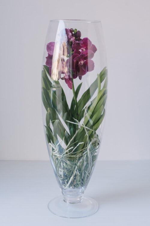Orhidee Vanda In Vas De Sticla
