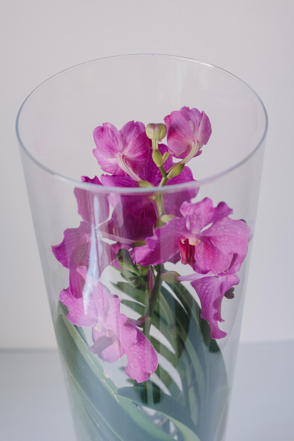 Orhidee Vanda Mov In Vas De Sticla