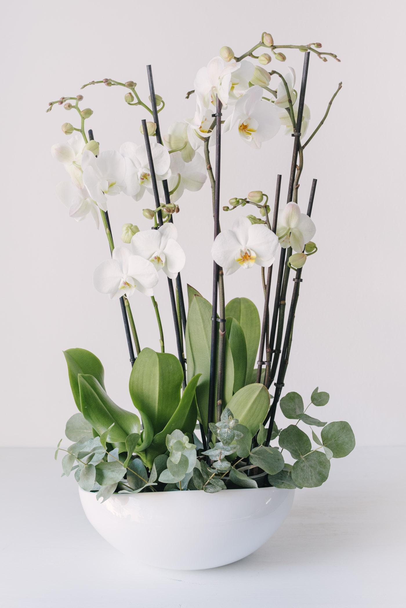 Aranjament Cu Orhidee Albe In Vas Ceramic