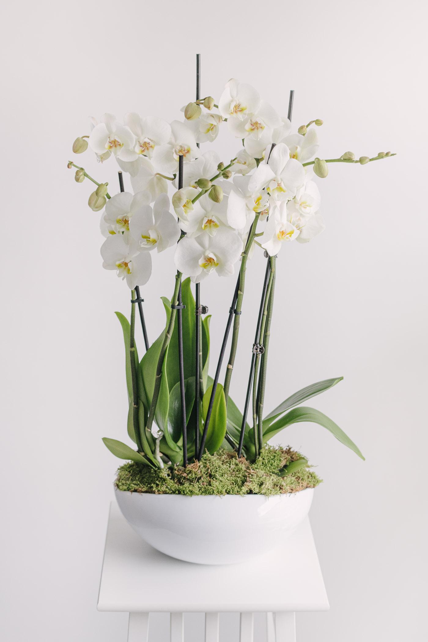 Aranjament In Vas Ceramic Cu Orhidee Si Muschi