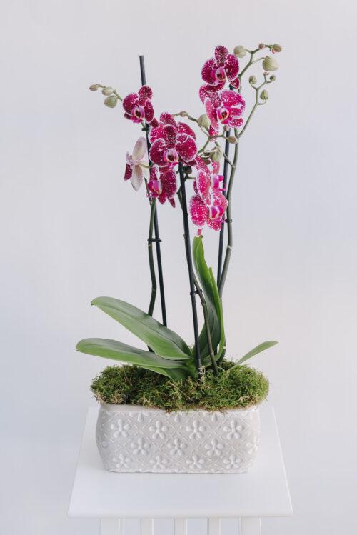 Aranjament cu o orhidee la ghiveci in vas ceramic