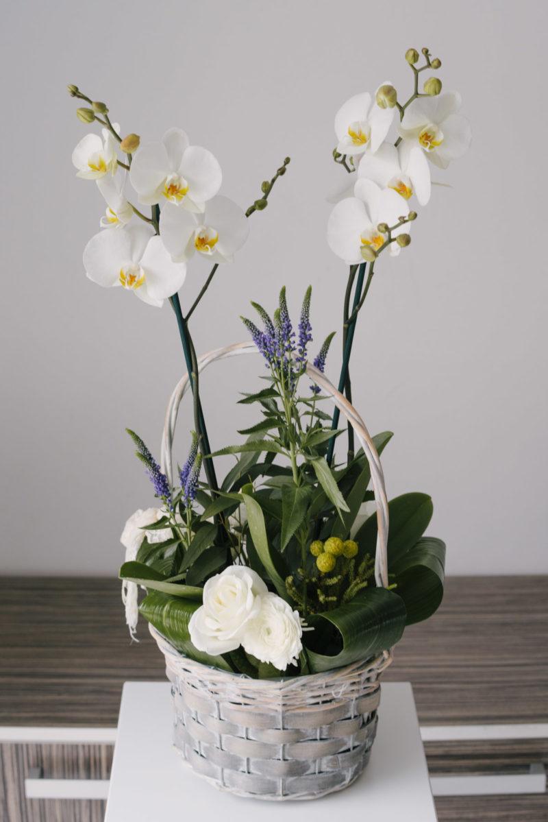 Aranjament Cu Orhidee La Ghiveci
