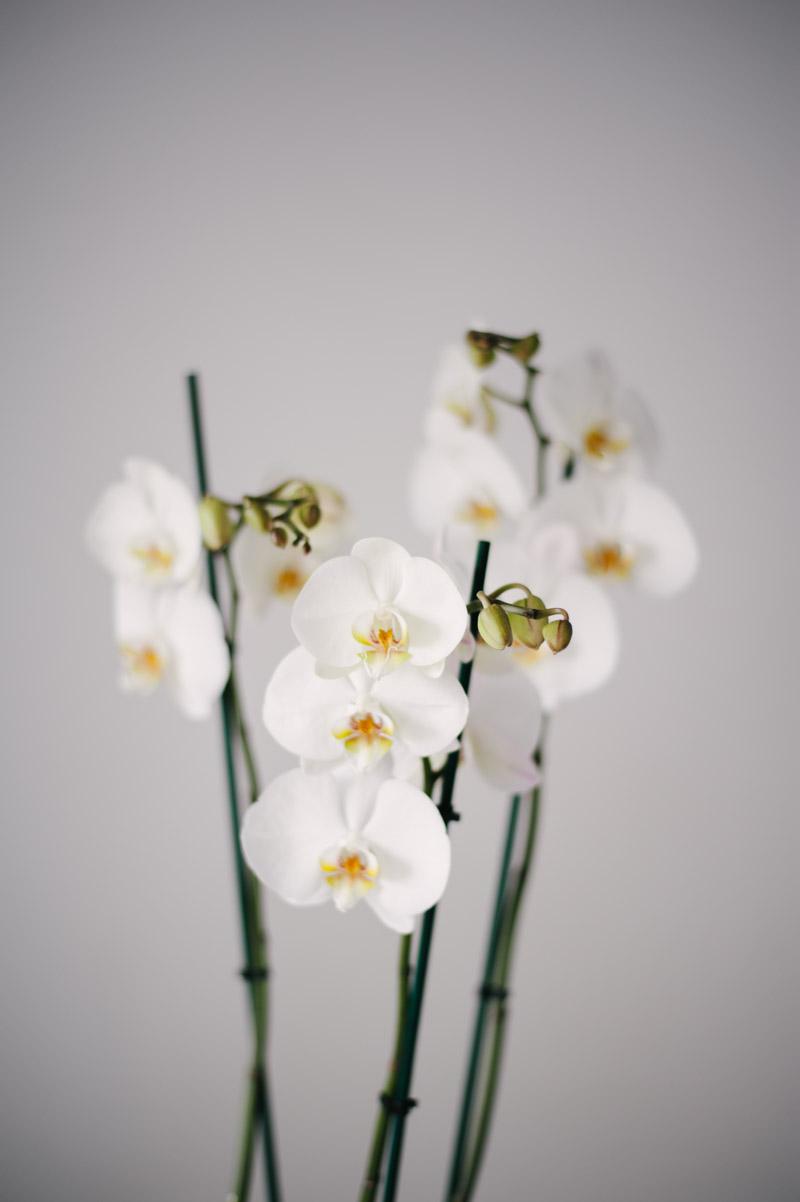 Comanda Orhidee La Ghiveci In Focsani
